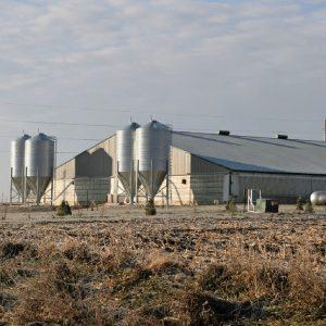 Swine Farms_square